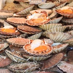 Argghhh thats were Scallops come from!